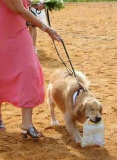 Something To End Your Day On The Right Note Smiley A Year Old - Born blind smiley the golden retriever becomes a loving therapy dog