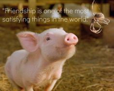 """I'm reading Charlotte's Web for the first time and I'm loving the quotes!  """"Friendship is one of the most satisfying things in the world."""""""