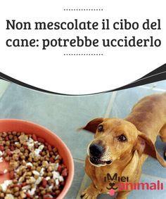 Dog food recipes - Non mescolate il cibo del cane potrebbe ucciderlo West Terrier, Flea Shampoo For Cats, Pet Dogs, Dog Cat, Puppies Tips, Lion Dog, Love Pet, My Animal, Dog Treats
