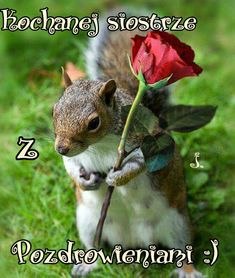 Pretty squirrel and flower pic Cute Squirrel, Baby Squirrel, Squirrels, Nature Animals, Animals And Pets, Cute Baby Animals, Funny Animals, Cute Animal Pictures, Chipmunks