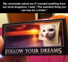 dollar store cat post card ☆ pinterest// sydharrisx ☆
