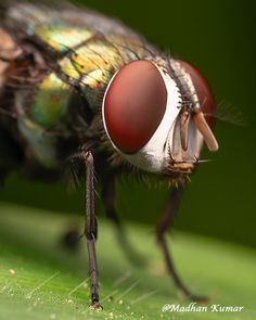 Macros, Macro Photography, Diffuser, Canon, Insects, Drama, Diy, Animals, Instagram