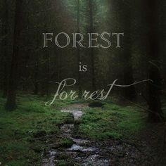 Super quotes nature adventure lets go ideas All Nature, Walking In Nature, Amazing Nature, Couple Look, Forest Quotes, Nature Quotes Adventure, Forest Bathing, Art Of Manliness, Life Quotes Love