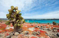 Galápagos, Equador - 5 ilhas imperdíveis para se visitar pelo mundo;