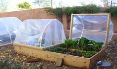 10 reasons to plant a garden -Ooooby  Pin is for the greenhouse tops on the raised beds, no tutorial though!