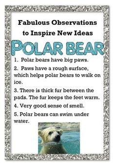 Fabulous Observations To New Ideas Polar Bear 2033710 Teaching