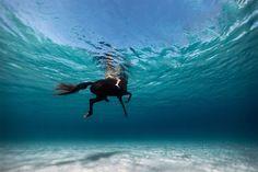 www.lacavalieremasquee.com | Underwater horses by Enric Adrian Gener