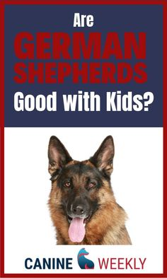 Canine weekly blog posts will tell you all about German Shepherd dogs and how they are with kids. German Shepherds are very loyal dogs and the German shepherd breed is very easy to train. Training your german Shepherd correctly from the start will enable them to be a great friend for your children. #GermanShepherdFamily #GermanShepherdTraining #KidsWithGermanShepherds