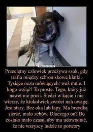 Zdjęcie Daily Quotes, Life Quotes, Funny Animals, Cute Animals, Important Quotes, True Stories, Pet Adoption, Sad, Humor