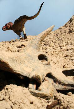 Tyrant of the Wasteland. #Dinosaur #Diorama Contest 2012 Winner. #tyrannosaur
