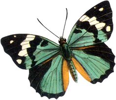 62 ideas for bird vintage tattoo beautiful Butterfly Drawing, Butterfly Painting, Butterfly Wallpaper, Butterfly Illustration, Vintage Butterfly, Blue Butterfly, Butterfly Wings, Art Papillon, Creative Advertising