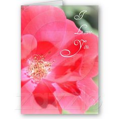 Red Rose I Love You Card