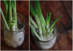 How to Grow Green Onions Indefinitely | 17 Apart: How to Grow Green Onions Indefinitely