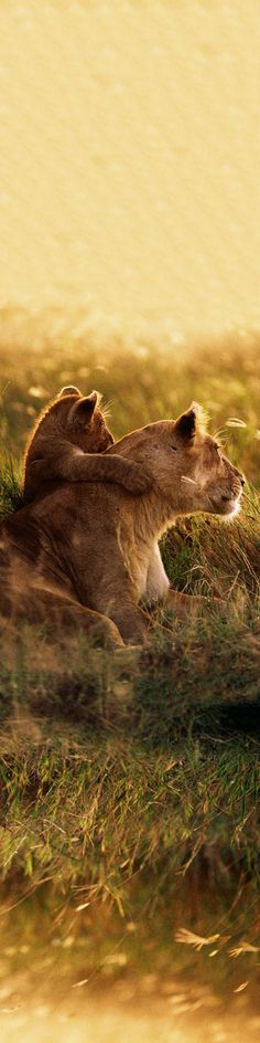 Mother & Cub Watching the Sun Set