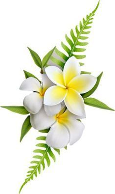 39 ideas for flowers png tropical - Bilder, Glückwünsche - Flower Tropical Flowers, Hawaiian Flowers, Exotic Flowers, Amazing Flowers, Flores Plumeria, Plumeria Flowers, Plumeria Flower Tattoos, Watercolor Clipart, Watercolor Flowers