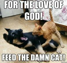Cats and dogs love each other do they not? #dogsfunnymeme