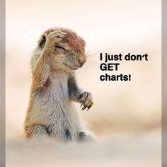 Few animal knitting funnies