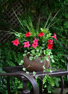 My Favorite❤️Rio dipladenia, red blooms with plectranthus and dracaena spike accents. Easy to grow and maintain, perfect for containers and garden beds. Container Flowers, Flower Planters, Container Plants, Container Gardening, Flower Pots, Patio Plants, Outdoor Planters, Garden Planters, Garden Beds