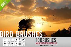 Flying bird photoshop brushes / Pinceles de photoshop de pájaros volando