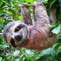 22_nathan rodgers_baby sloth.jpg