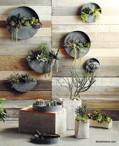 Roost Orbea Zinc Circle & Half-Circle Wall Planters Roost Orbea Zinc Circle Planters are made from galvanized iron with an aged zinc finish. Perfect for succulents and small plants, these full and half-circle wall planters are both rustic and original. Zinc Planters, Outdoor Planters, Outdoor Gardens, Planter Pots, Indoor Outdoor, Hanging Planters, Planter Ideas, Outdoor Ideas, Rustic Planters