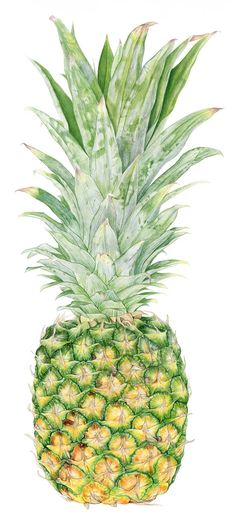 Pineapple Botanical Print from original watercolor painting