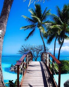 Travel Discover Paradise Tag wallpapers Page Ocean Palms Beach Island French Vacation Places Dream Vacations Vacation Spots Places To Travel Places To Visit Terre Nature Tropical Beaches Exotic Beaches Places Around The World Vacation Places, Dream Vacations, Vacation Spots, Places To Travel, Places To See, Romantic Vacations, Italy Vacation, Honeymoon Destinations, Places Around The World
