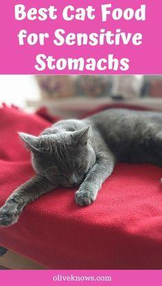 10 Best Hypoallergenic Cat Food In 2020 Reviews Sensitive Stomach Cat Food Cat Food Best Cat Food