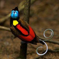 What a weird looking bird!