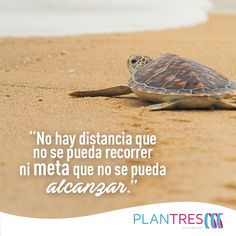 #Quote #BajarDePeso #Dieta #Metas