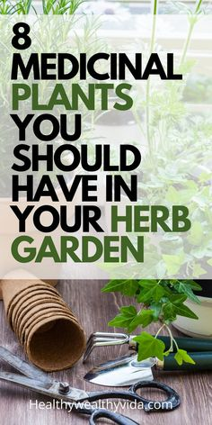 8 powerful medicinal plants every herb garden should have. Looking to grow a physic garden? These medicinal plants are the perfect choice to start off your physic garden in the right way, even if you don't have a green thumb! Aromatic Herbs, Healing Herbs, Medicinal Plants, Easy Herbs To Grow, Growing Herbs, Growing Vegetables, Gardening For Beginners, Gardening Tips, Hydroponic Gardening
