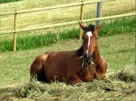 Duca, Horse Breeds, Itunes, Around The Worlds, Horses, App, Animals, Animales, Animaux