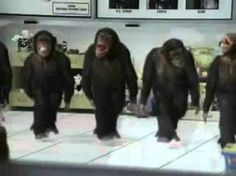 Happy Birthday, Dancing Chimps Style! - YouTube