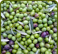 Olives from Sardinia in the Langhe. That kind of olives is usually used to make the best olives oils. Good perfume, good taste.