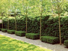 L'importanza e la scelta delle siepi da giardino. Come realizzarle e prendersene cura? http://www.arredamento.it/giardino/giardinaggio/siepi-da-giardino.html #consigligiardino #siepi #giardinaggio