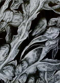 A drawing of seaweed close up