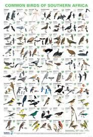 Common Birds of Southern Africa Poster Common Birds, Bird Poster, Environmental Education, Backyard Birds, Tropical Fish, Bird Watching, Natural History, South Africa, Wildlife