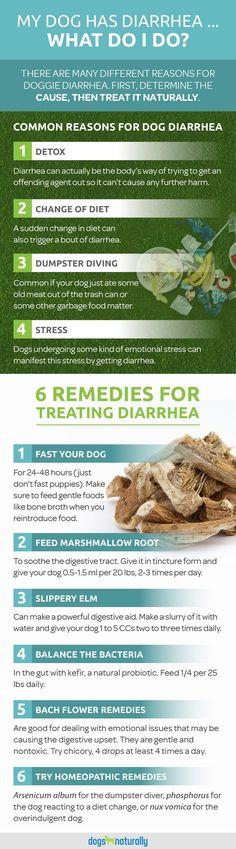 die besten 25 dog has diarrhea ideen auf pinterest k rbis hundekuchen mittel gegen. Black Bedroom Furniture Sets. Home Design Ideas