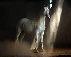 By: Wojtek Kwiatkowski Arabian Horse Equipment:Nikon D600 nikkor AF-S VR 70-200 f/2.8G IF-ED