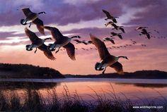 Artist David Maass Unframed Waterfowl Art Print Twilight-Canada Geese   WildlifePrints.com
