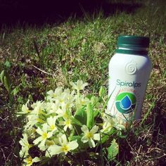 Instagram photo by @crapuce_pict (Géraldine) | Statigram - www.spiralps.ch - Spirulina Drink