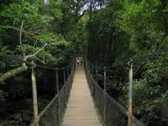 Photo Friday: Mossman Gorge in Daintree National Park - GET In the HOT Spot with Annabel Candy Queensland Australia, Western Australia, Australia Travel, Australian Continent, Suspension Bridge, Largest Countries, Small Island, Continents, Great Britain