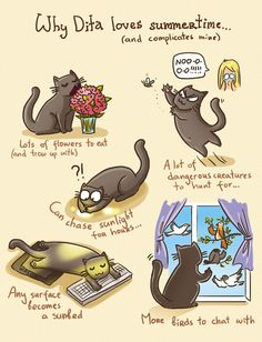 About summer in feline style