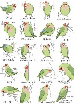 My birb does all these things. Xcept bite my nose really hard. He bites it litely Funny Birds, Cute Birds, Bird Drawings, Animal Drawings, Cute Baby Animals, Animals And Pets, Chibi, Parrot Toys, Budgies