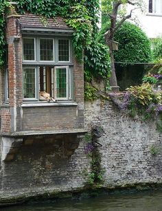 I saw this dog in Bruges, Belgium last summer. He sits in the window all day waiting for his master to come home.