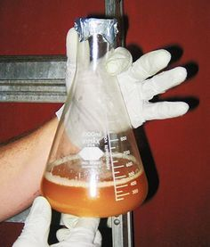 How to Harvest Yeast from a Commercial Beer | E. C. Kraus #homebrewing Blog