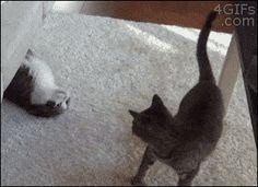Huehuehue...you're mine!