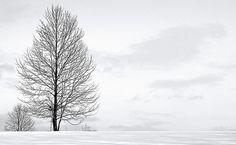 Tree (by tulasinandan)