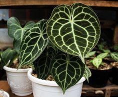 230 Ideas De Plantas Ornamentales Y Decorativas Plantas Ornamentales Horticultura Plantas