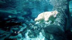 After living most of his life at SeaWorld Orlando, Klondike, an 18-year-old polar bear, has died